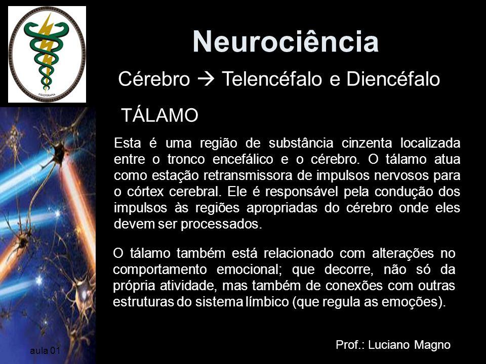 Neurociência Cérebro  Telencéfalo e Diencéfalo TÁLAMO
