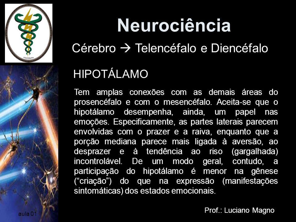 Neurociência Cérebro  Telencéfalo e Diencéfalo HIPOTÁLAMO