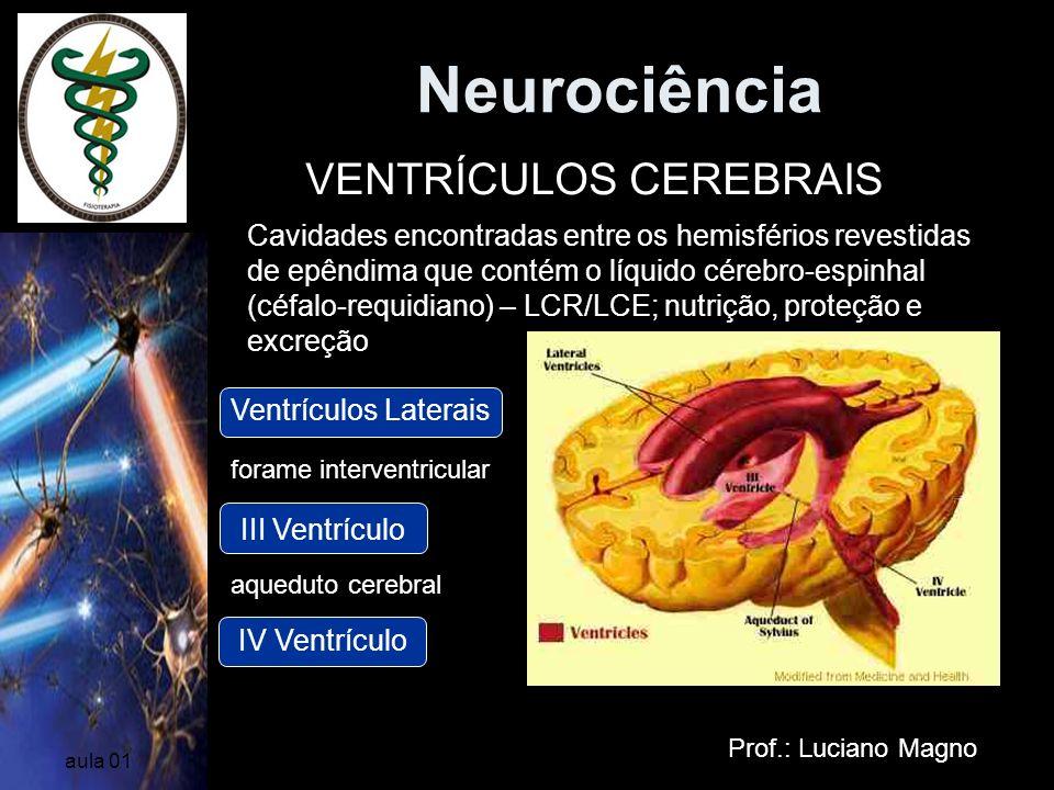 Neurociência VENTRÍCULOS CEREBRAIS