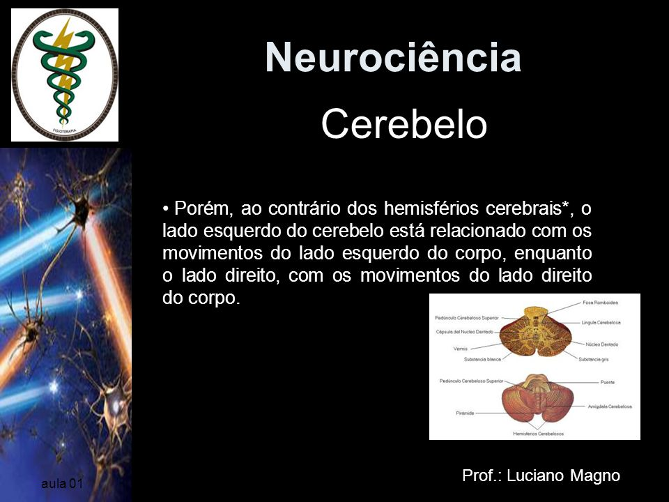 Neurociência Cerebelo Dividido em dois hemisférios