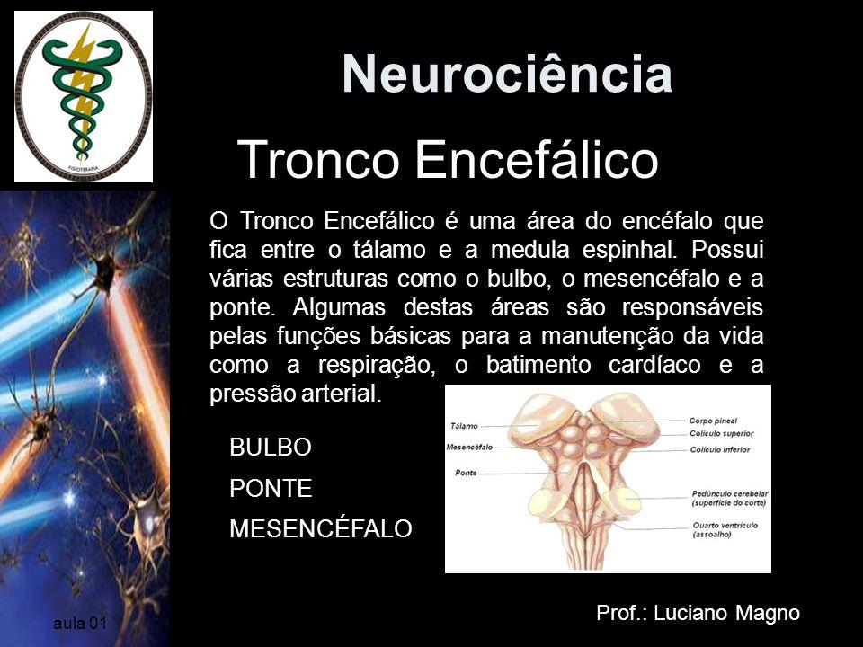 Neurociência Tronco Encefálico