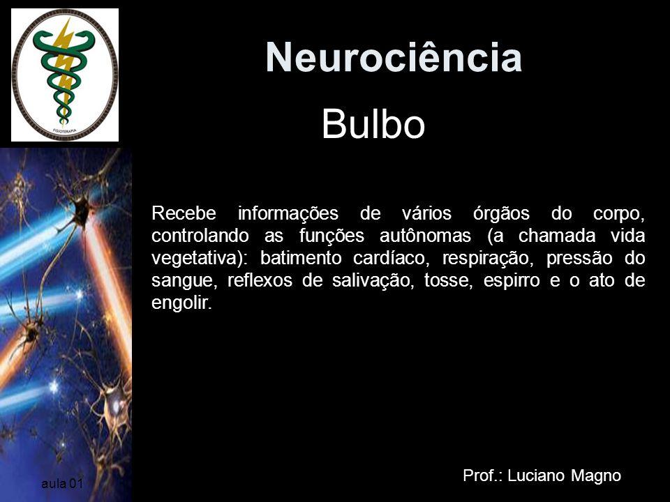 Neurociência Bulbo.