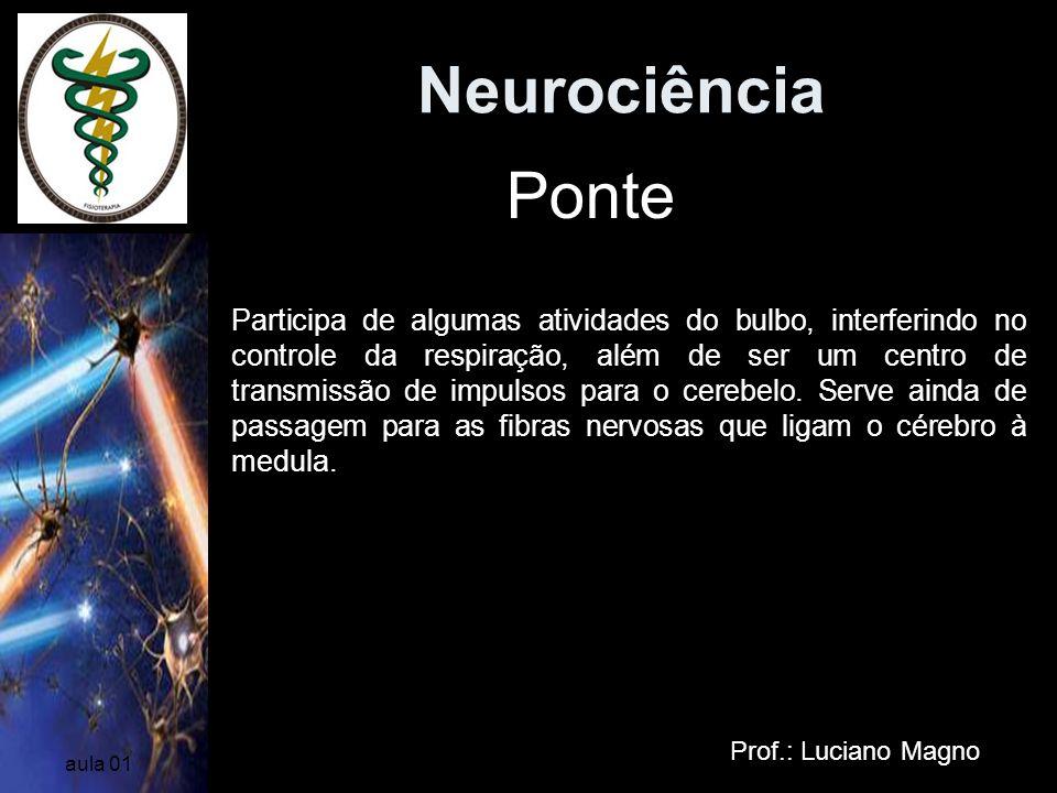 Neurociência Ponte.