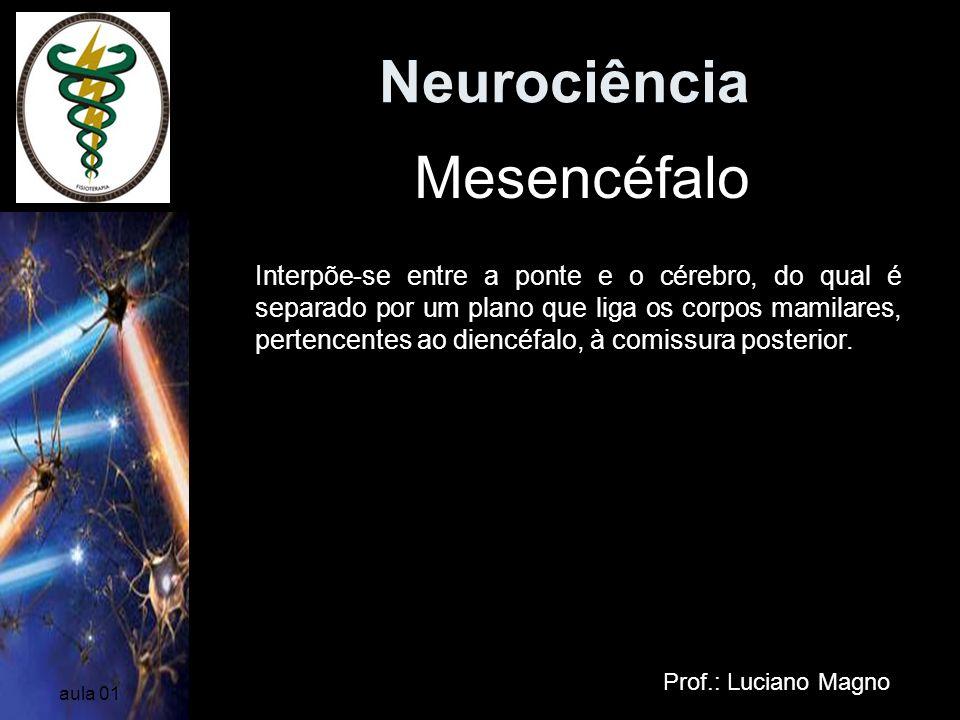 Neurociência Mesencéfalo
