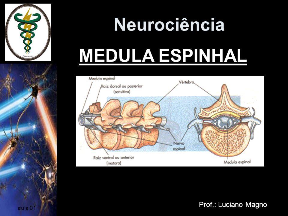 Neurociência MEDULA ESPINHAL Prof.: Luciano Magno aula 01
