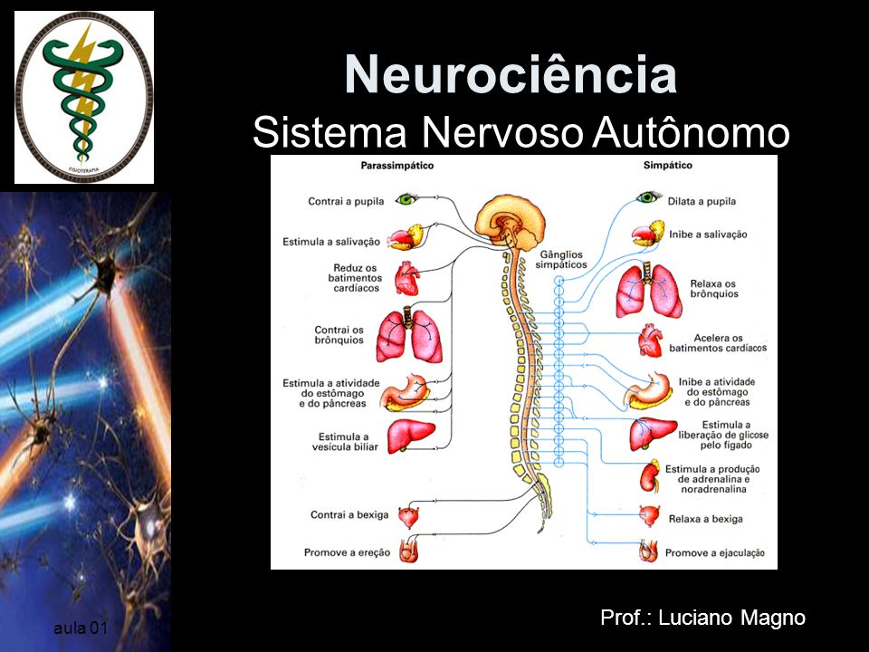 Neurociência Sistema Nervoso Autônomo Prof.: Luciano Magno aula 01
