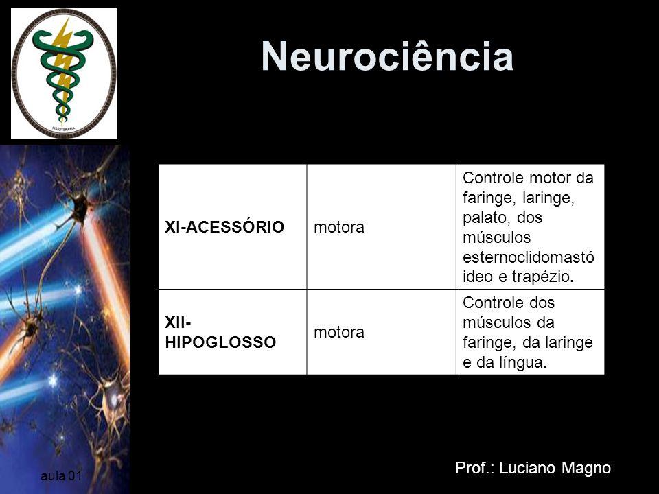 Neurociência Nervos Cranianos XI-ACESSÓRIO motora