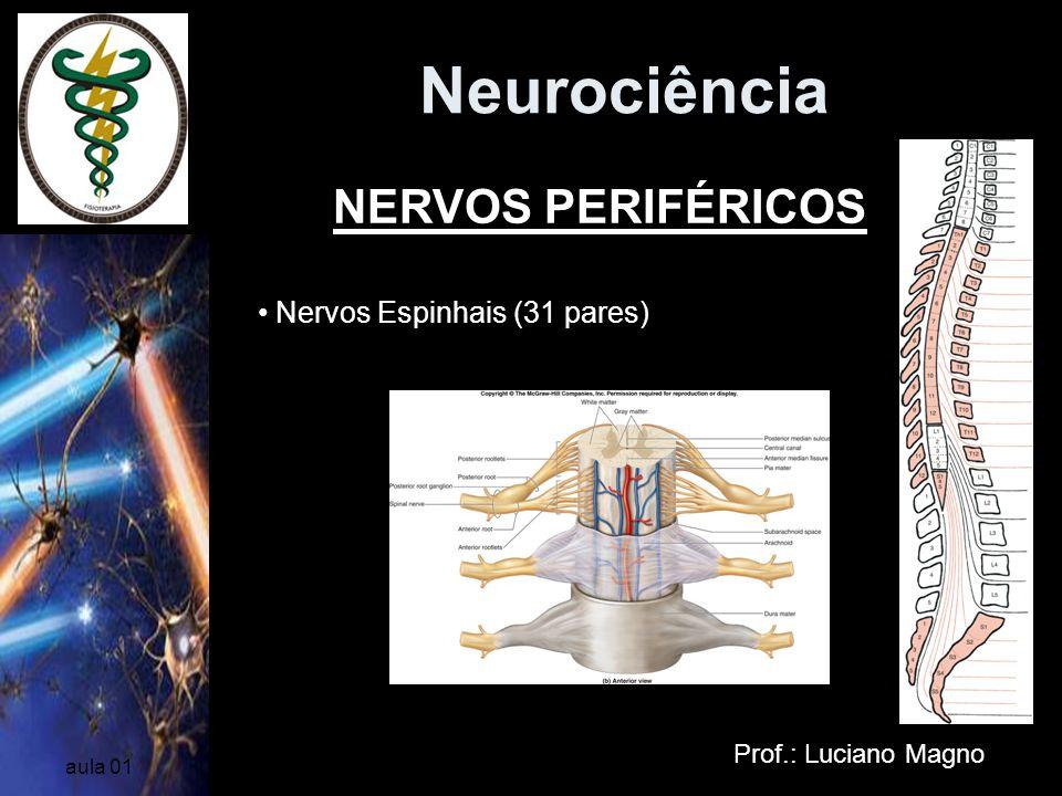 Neurociência NERVOS PERIFÉRICOS Nervos Espinhais (31 pares)