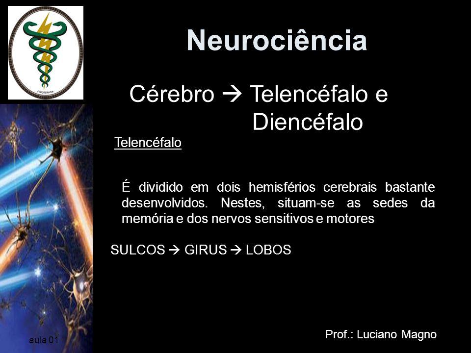 Neurociência Cérebro  Telencéfalo e Diencéfalo Telencéfalo