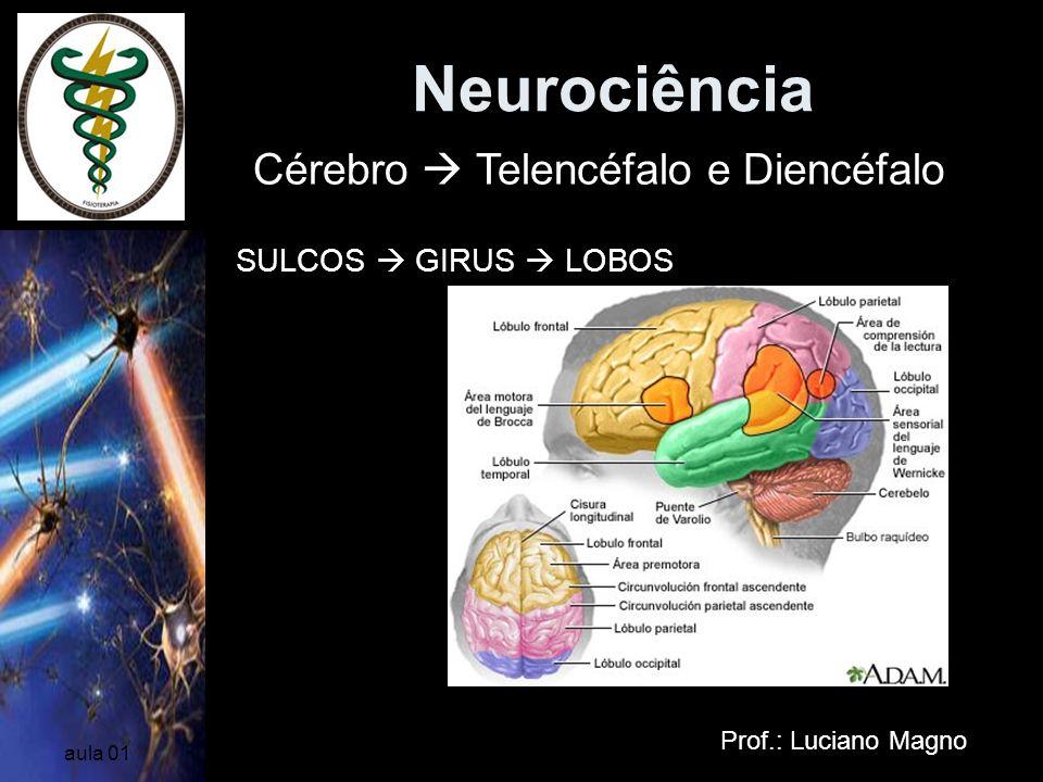 Neurociência Cérebro  Telencéfalo e Diencéfalo SULCOS  GIRUS  LOBOS