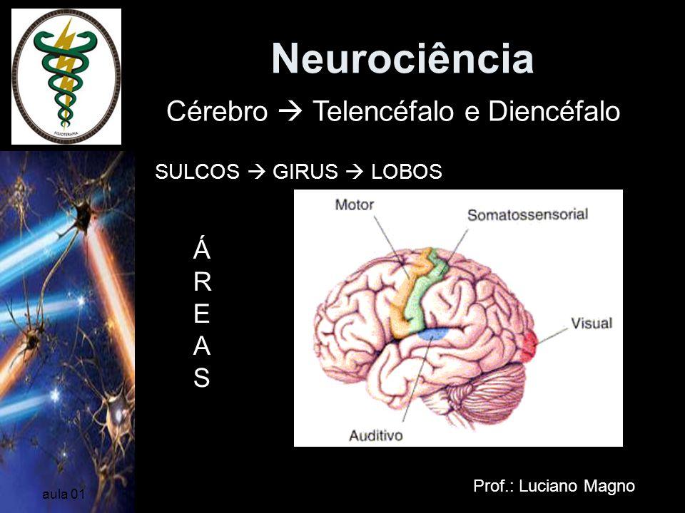 Neurociência Cérebro  Telencéfalo e Diencéfalo ÁREAS