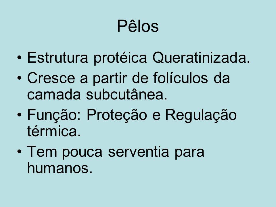 Pêlos Estrutura protéica Queratinizada.