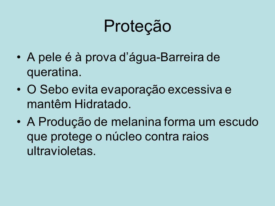 Proteção A pele é à prova d'água-Barreira de queratina.