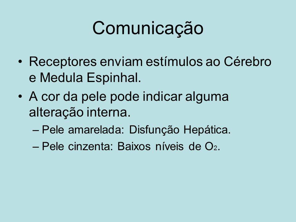 Comunicação Receptores enviam estímulos ao Cérebro e Medula Espinhal.