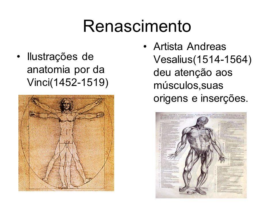 Renascimento Artista Andreas Vesalius(1514-1564) deu atenção aos músculos,suas origens e inserções.
