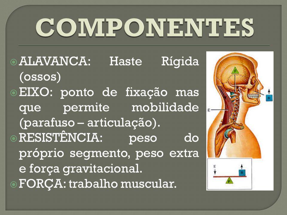 COMPONENTES ALAVANCA: Haste Rígida (ossos)