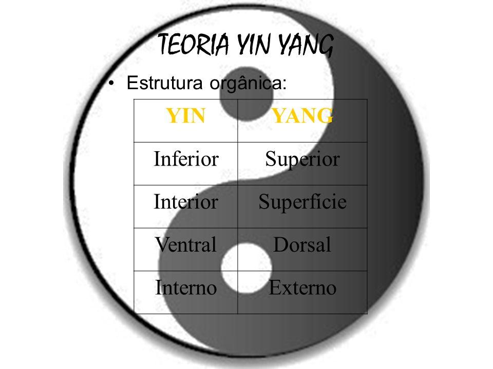 TEORIA YIN YANG YIN YANG Inferior Superior Interior Superfície Ventral