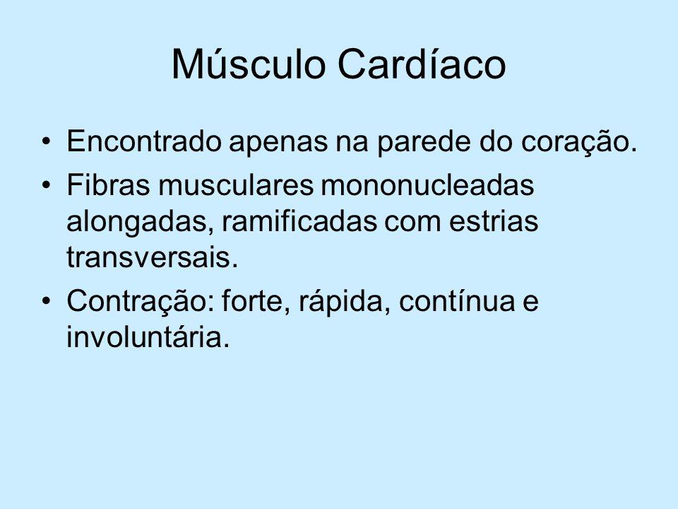 Músculo Cardíaco Encontrado apenas na parede do coração.
