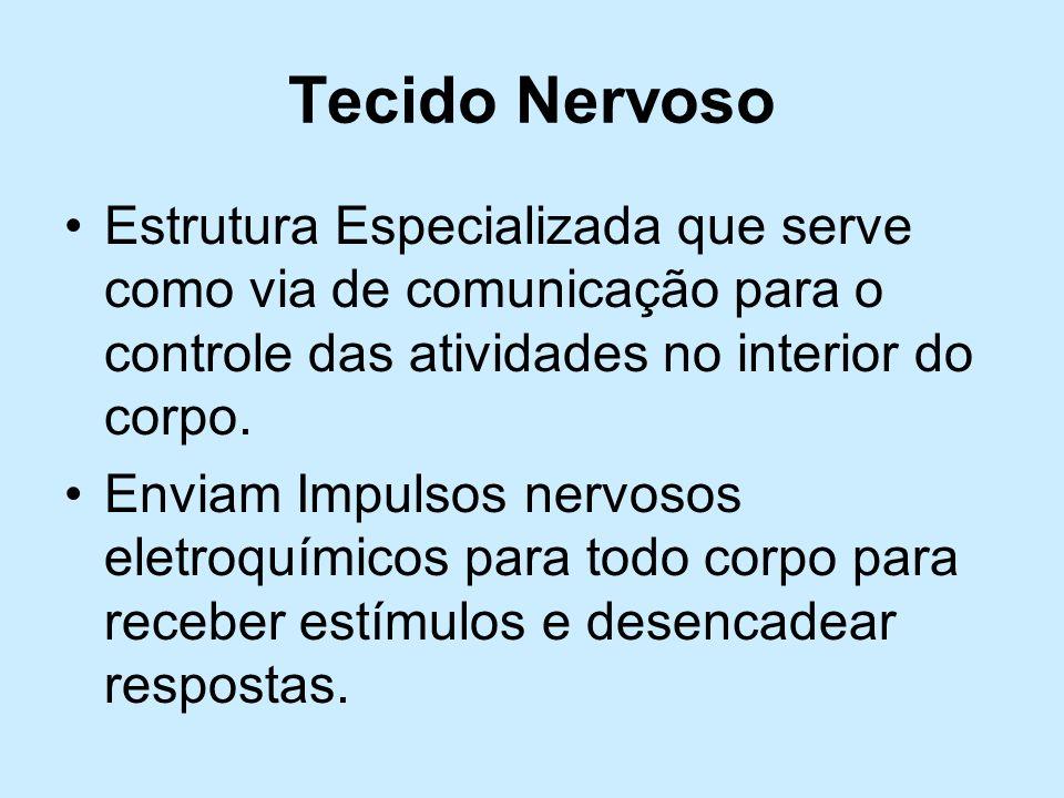 Tecido NervosoEstrutura Especializada que serve como via de comunicação para o controle das atividades no interior do corpo.