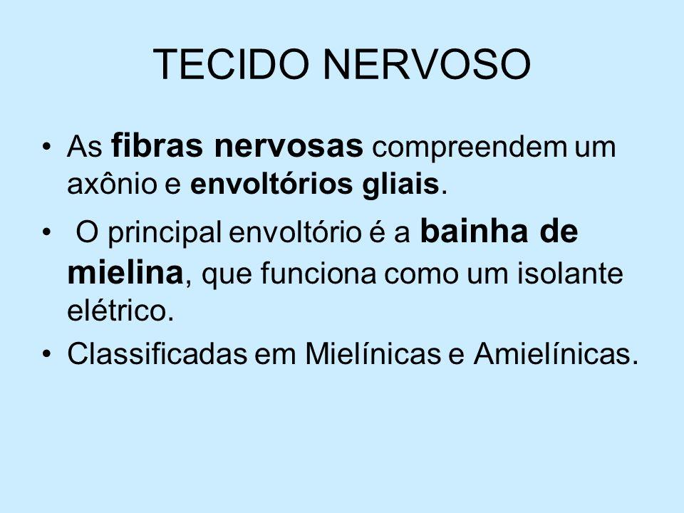 TECIDO NERVOSOAs fibras nervosas compreendem um axônio e envoltórios gliais.