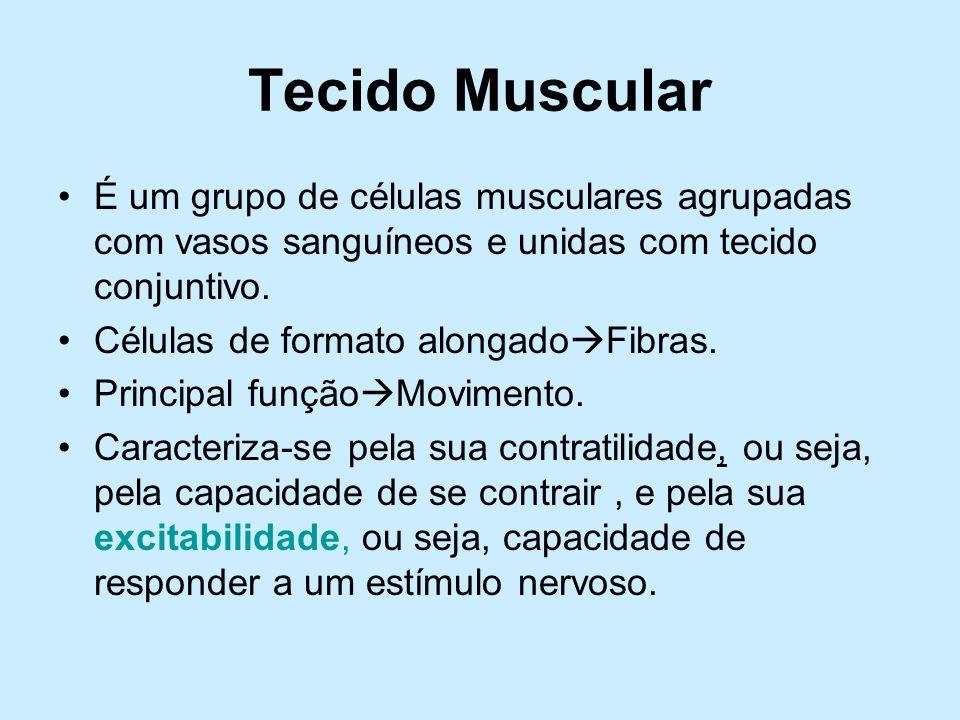 Tecido Muscular É um grupo de células musculares agrupadas com vasos sanguíneos e unidas com tecido conjuntivo.