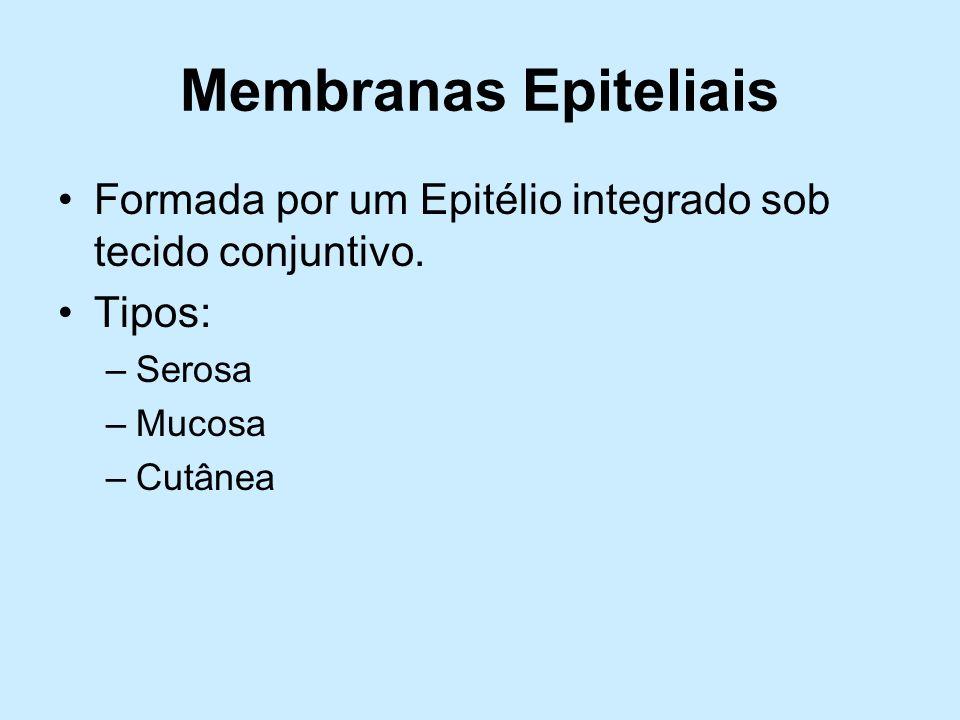 Membranas Epiteliais Formada por um Epitélio integrado sob tecido conjuntivo. Tipos: Serosa. Mucosa.