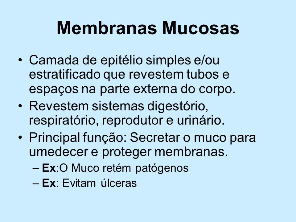 Membranas Mucosas Camada de epitélio simples e/ou estratificado que revestem tubos e espaços na parte externa do corpo.