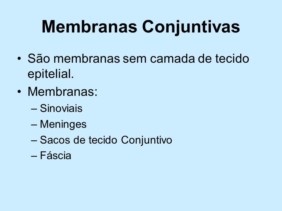 Membranas Conjuntivas