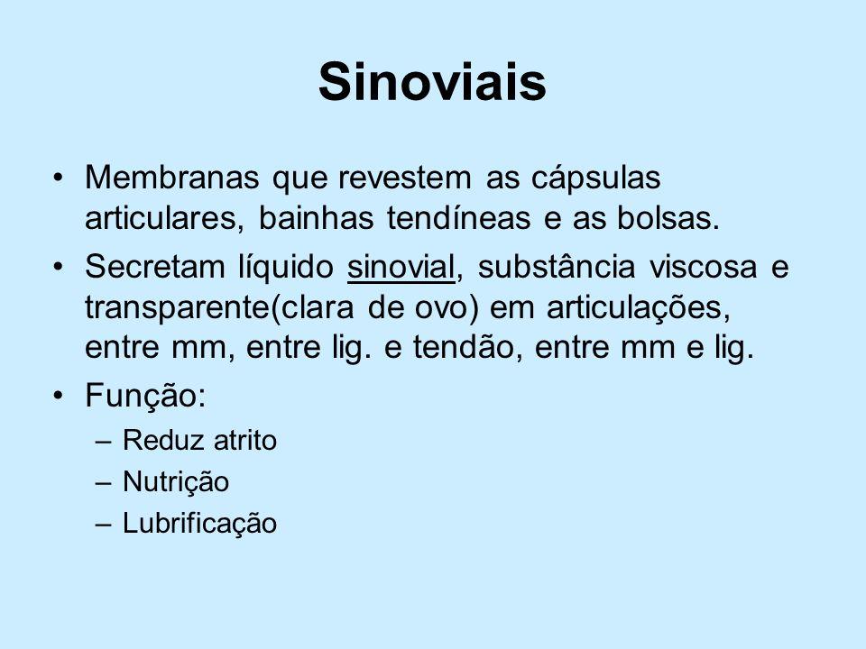 SinoviaisMembranas que revestem as cápsulas articulares, bainhas tendíneas e as bolsas.