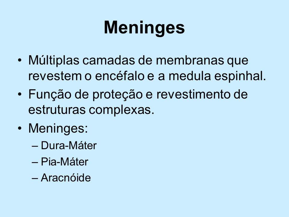MeningesMúltiplas camadas de membranas que revestem o encéfalo e a medula espinhal. Função de proteção e revestimento de estruturas complexas.
