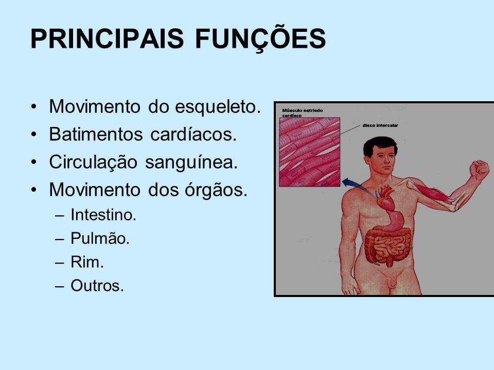 PRINCIPAIS FUNÇÕES Movimento do esqueleto. Batimentos cardíacos.