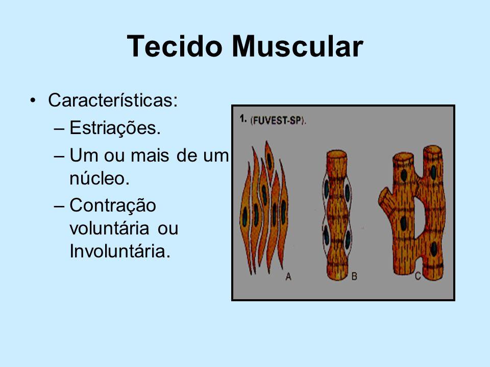 Tecido Muscular Características: Estriações. Um ou mais de um núcleo.