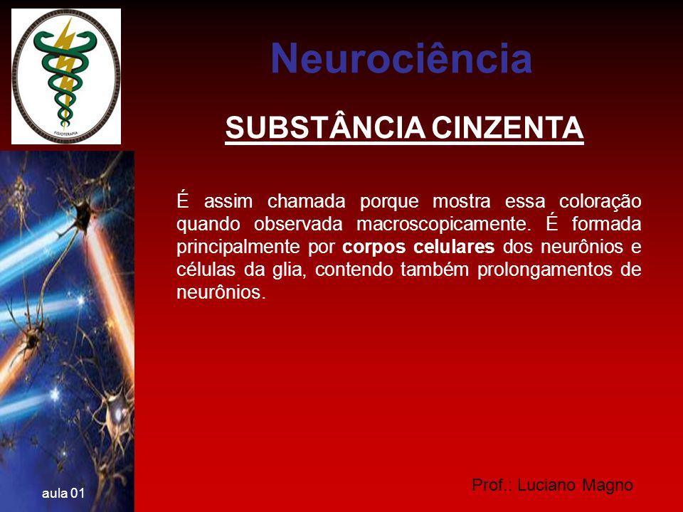 Neurociência SUBSTÂNCIA CINZENTA