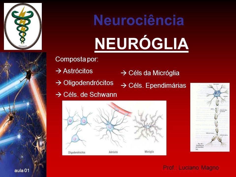 NEURÓGLIA Neurociência Composta por:  Astrócitos  Oligodendrócitos