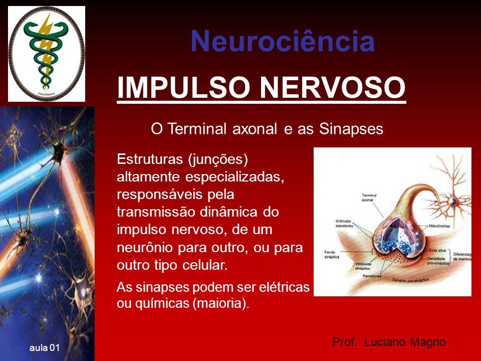 Neurociência IMPULSO NERVOSO O Terminal axonal e as Sinapses