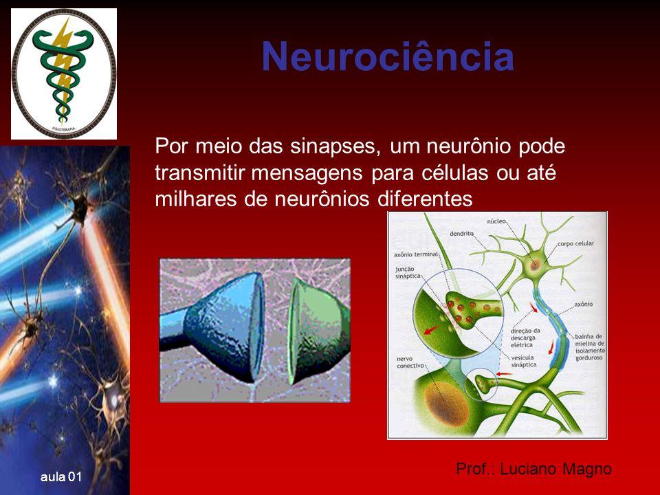 Neurociência Por meio das sinapses, um neurônio pode transmitir mensagens para células ou até milhares de neurônios diferentes.