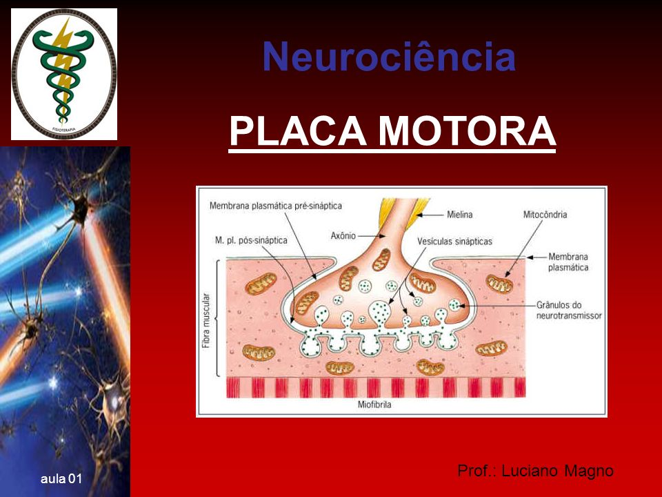 Neurociência PLACA MOTORA Prof.: Luciano Magno aula 01