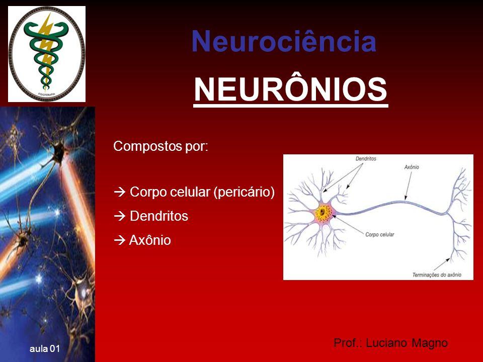 NEURÔNIOS Neurociência Compostos por:  Corpo celular (pericário)