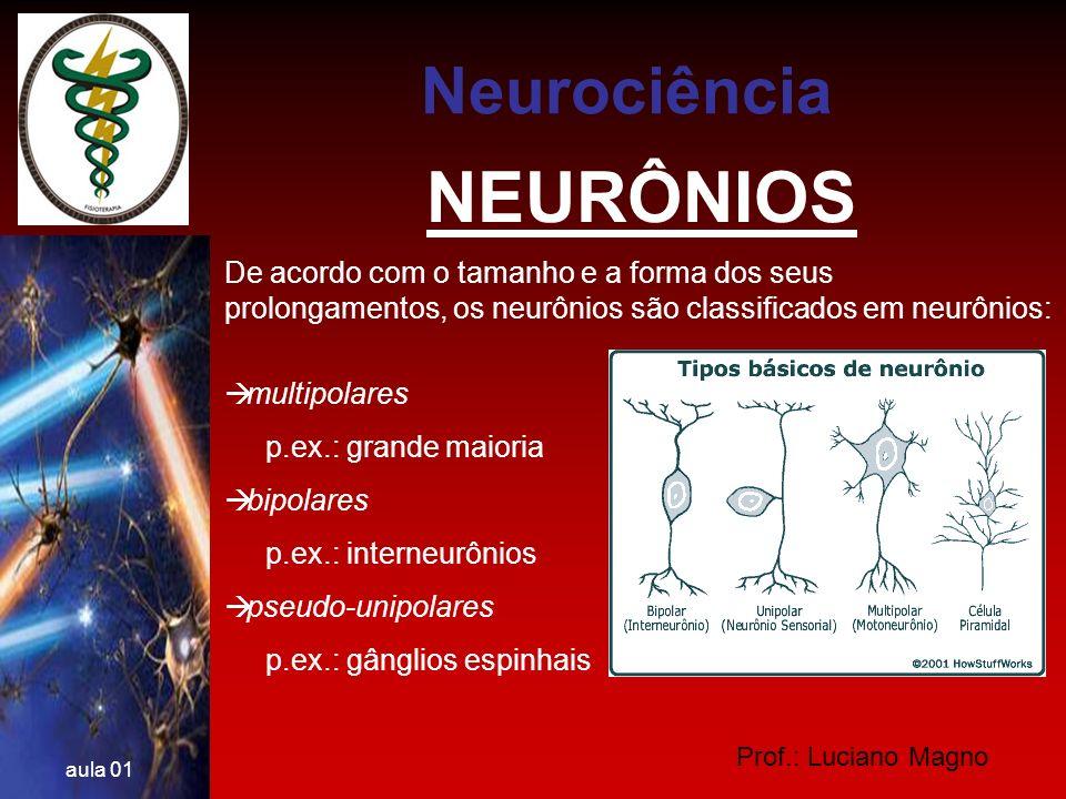 NEURÔNIOS Neurociência