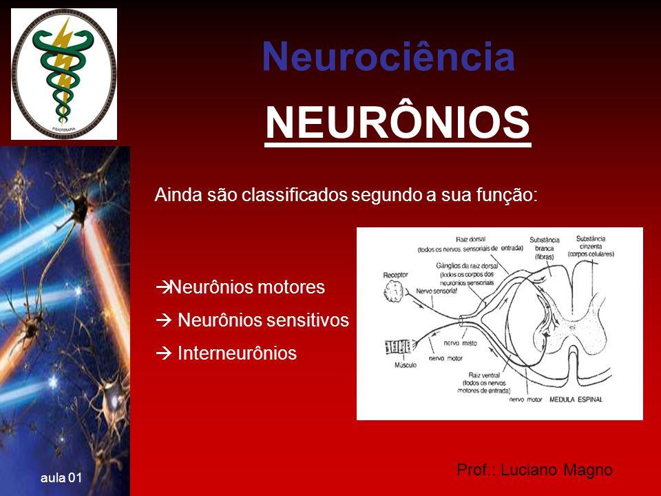 NEURÔNIOS Neurociência Ainda são classificados segundo a sua função:
