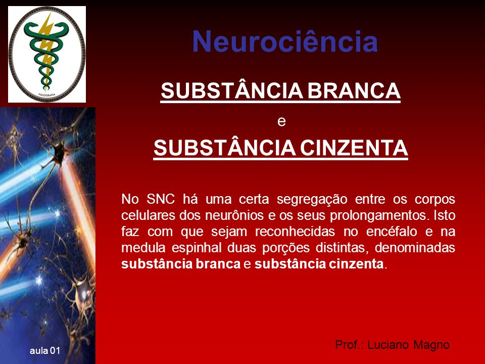 Neurociência SUBSTÂNCIA BRANCA SUBSTÂNCIA CINZENTA e