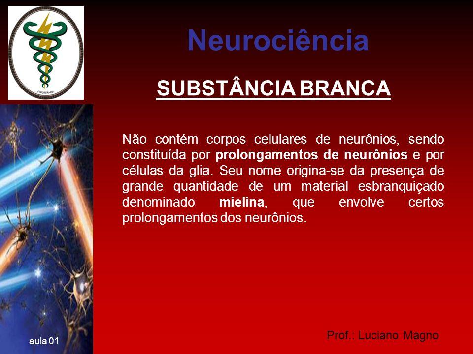 Neurociência SUBSTÂNCIA BRANCA