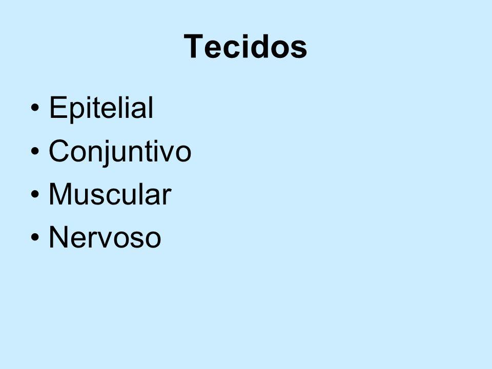 Tecidos • Epitelial Conjuntivo Muscular Nervoso