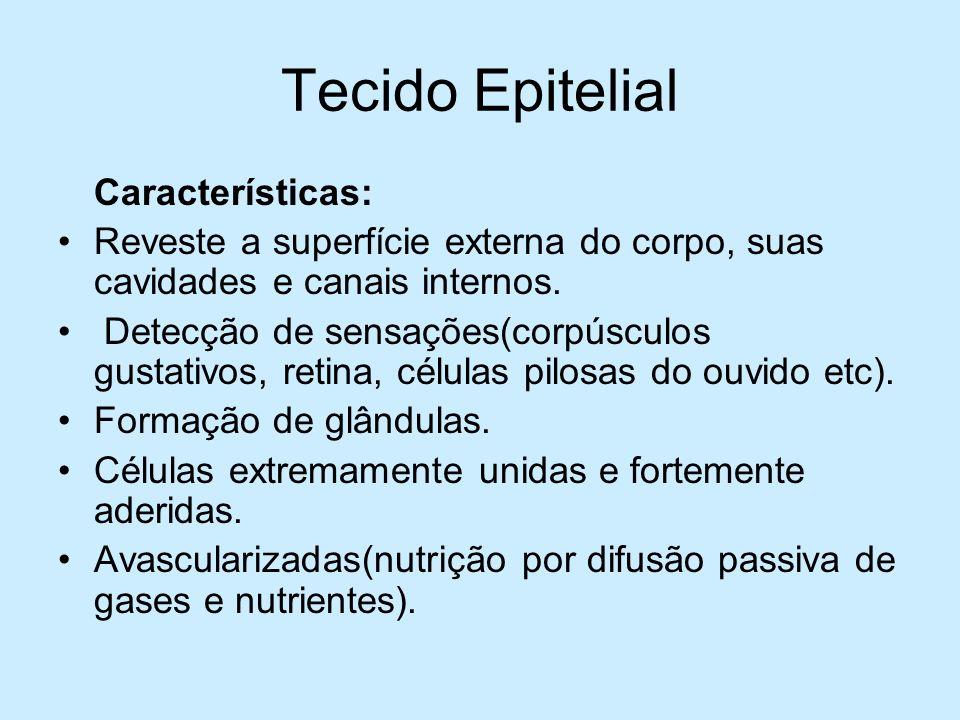 Tecido Epitelial Características: