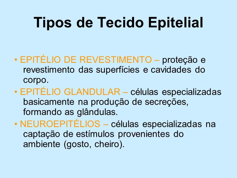 Tipos de Tecido Epitelial