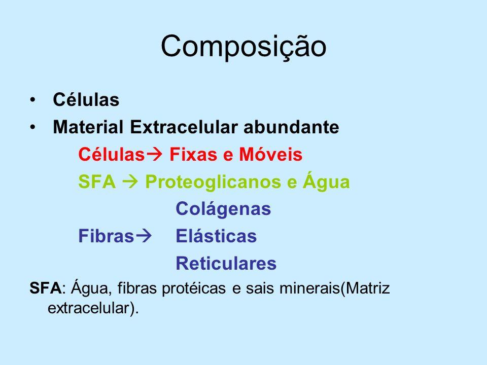 Composição Células Material Extracelular abundante