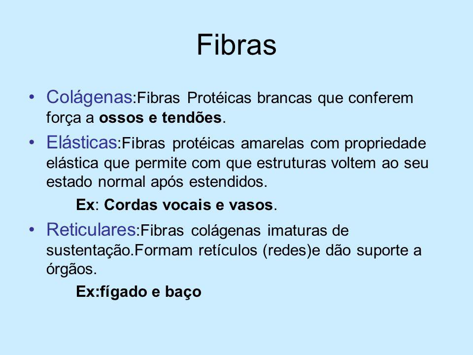 Fibras Colágenas:Fibras Protéicas brancas que conferem força a ossos e tendões.
