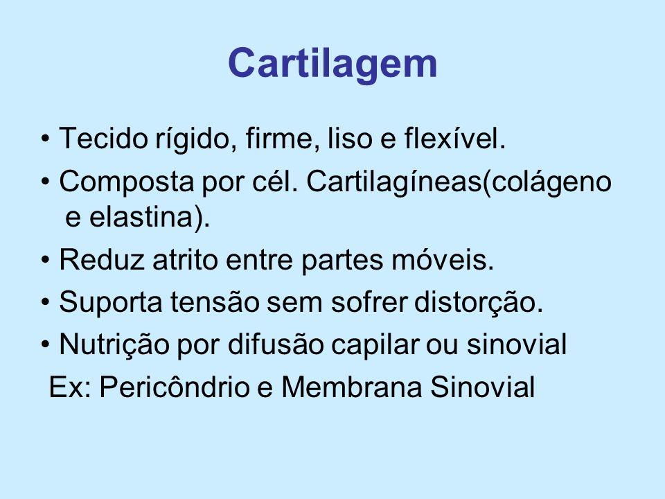 Cartilagem • Tecido rígido, firme, liso e flexível.
