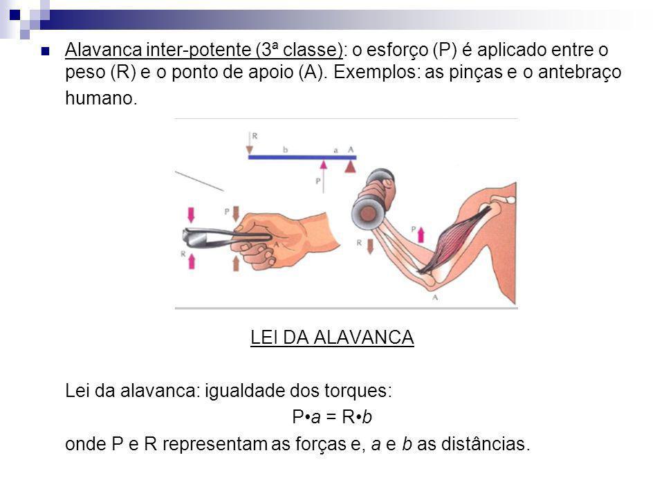 Alavanca inter-potente (3ª classe): o esforço (P) é aplicado entre o peso (R) e o ponto de apoio (A). Exemplos: as pinças e o antebraço