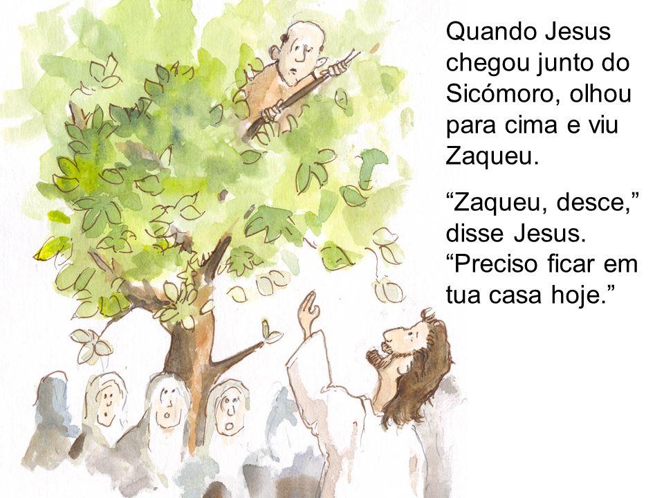 Quando Jesus chegou junto do Sicómoro, olhou para cima e viu Zaqueu.